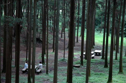 横浜:追分市民の森