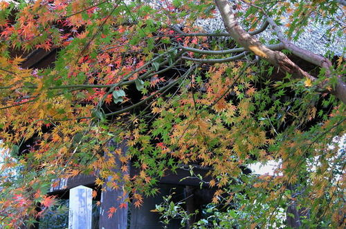 鎌倉:東慶寺