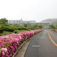 葉山・湘南国際村