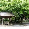 鎌倉・妙本寺