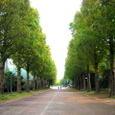 平塚総合公園(メタセコイア)