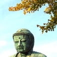 鎌倉・高徳院(大仏)