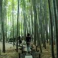 鎌倉:報国時・竹の庭