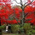 鎌倉:源氏山公園