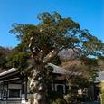 鎌倉:長谷寺