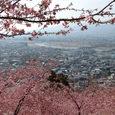 松田:桜まつり