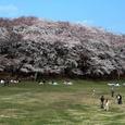 横浜:根岸森林公園