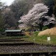 横浜:こども自然公園
