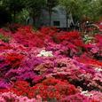 葉山:花の木公園