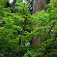 鎌倉:円覚寺