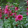 横浜:四季の森公園
