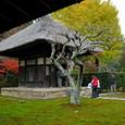 鎌倉:長寿寺