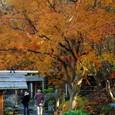 鎌倉:鶴岡八幡宮神苑