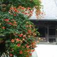 鎌倉:妙本寺