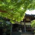 鎌倉:安国論寺