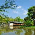 鎌倉:鶴岡八幡宮・源氏池