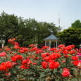 横浜:港の見える丘公園