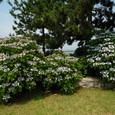 横浜:八景島