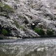 鎌倉:鶴岡八幡宮源氏池