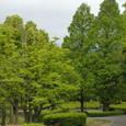 藤沢:大庭城址公園