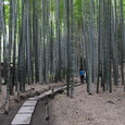 鎌倉:報国寺・竹林