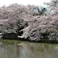 鎌倉:源氏池