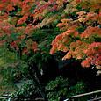 紅葉(鎌倉:長谷寺)