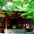 新緑(鎌倉:円覚寺)