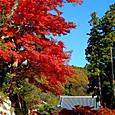 紅葉(鎌倉:円覚寺)