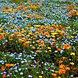 田んぼのお花畑