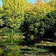 フラワーセンター大船植物園:スイレン池