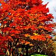 平塚:高麗山公園